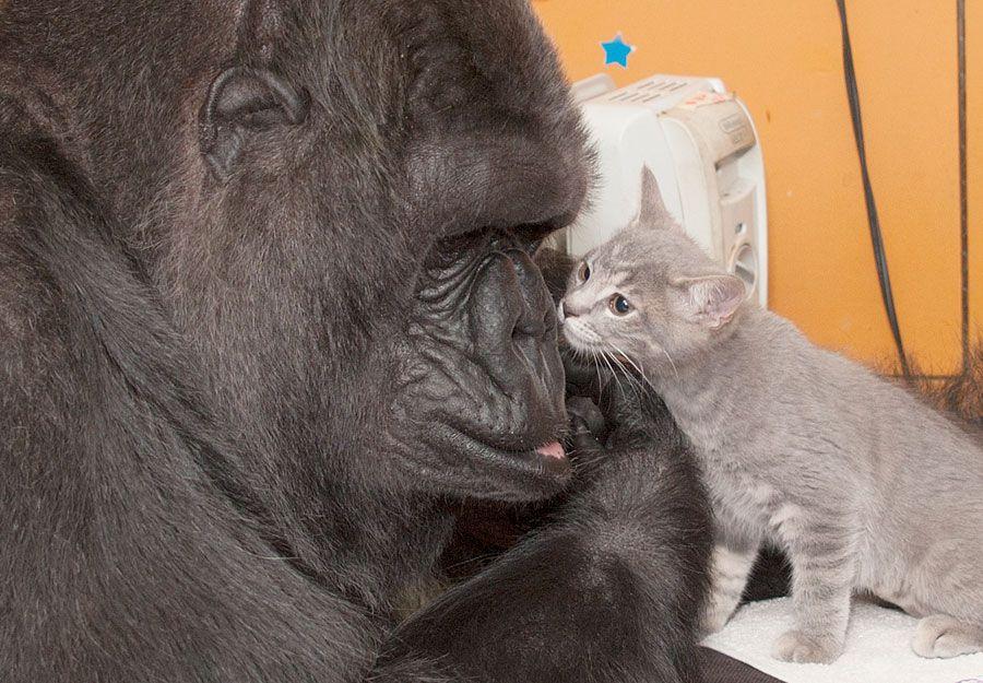 6_21_Koko and cat