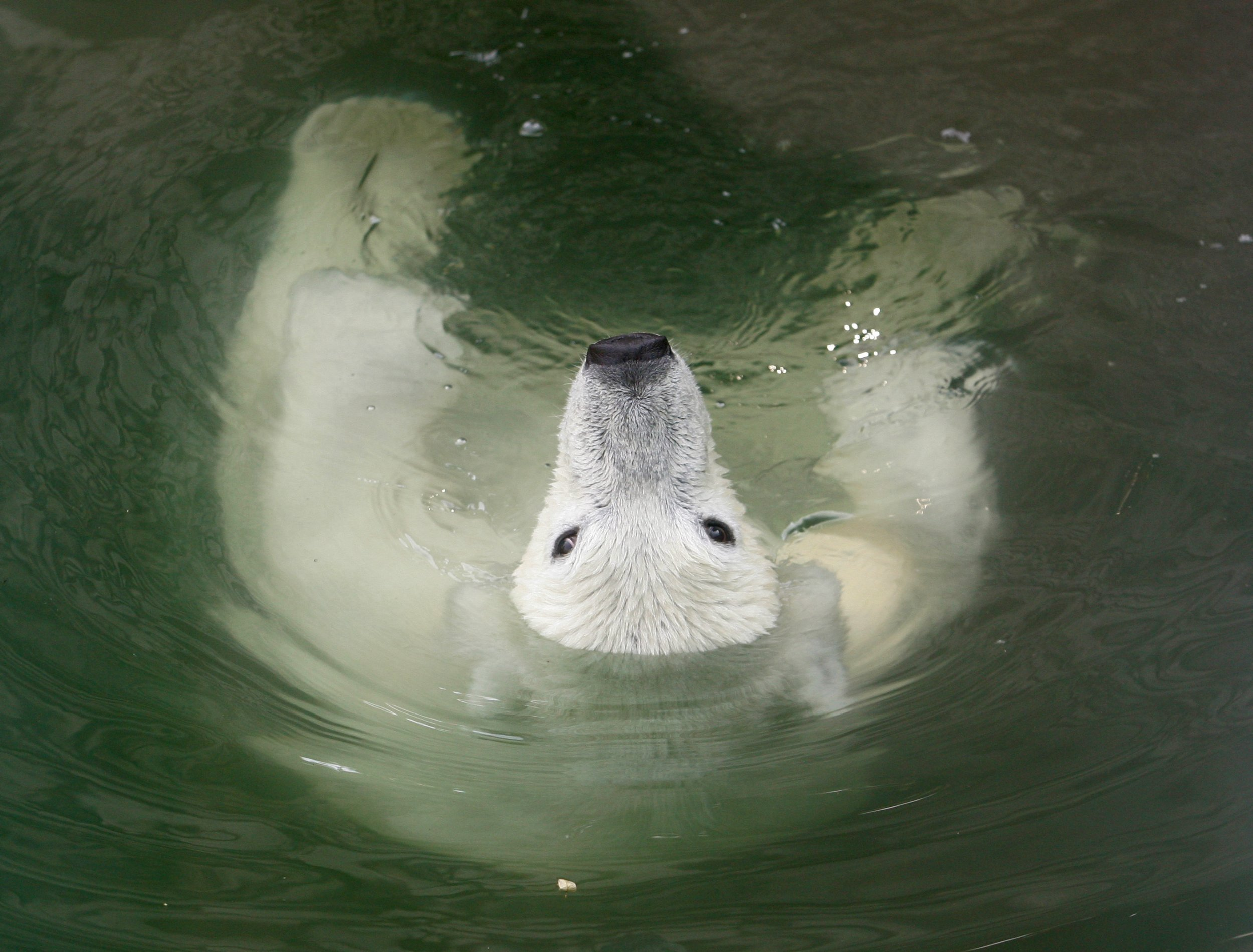 06_22_polar-bear